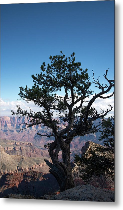 Grand Canyon National Park Metal Print featuring the photograph Lone Tree 2 by Frank Madia