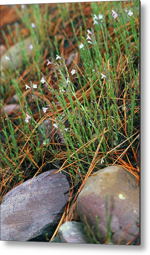 Forest Floor Metal Print featuring the photograph Miniature Bells by Randy Oberg