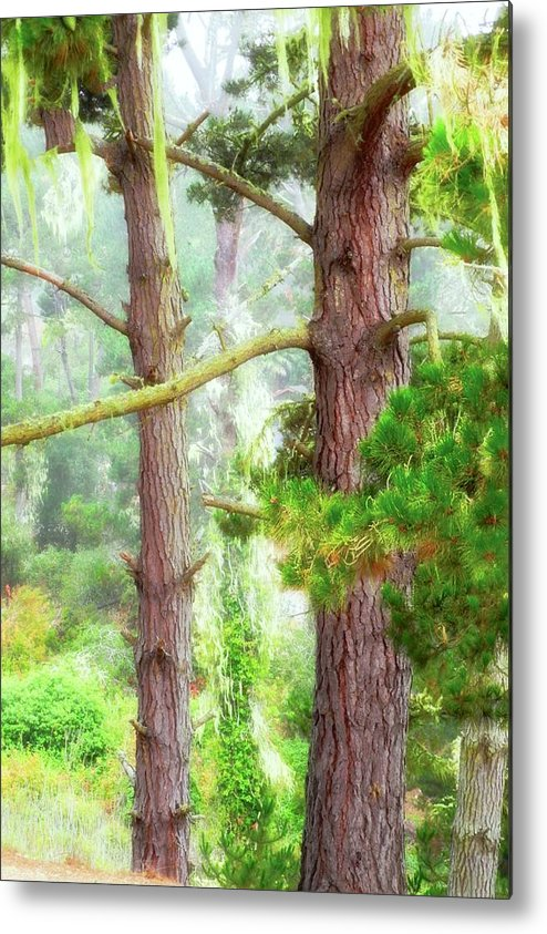 Trees Metal Print featuring the photograph Moss Draped Trees in the Fog by Kirsten Giving