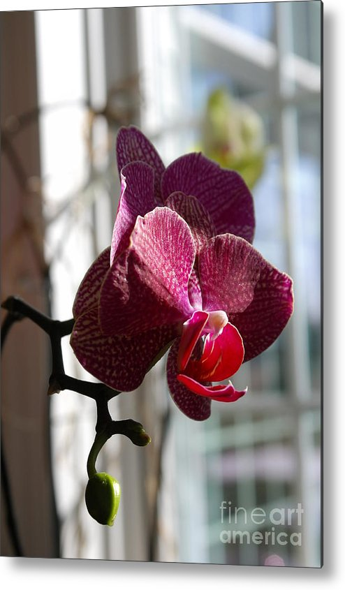 Orchid Metal Print featuring the photograph Orchid - 102 by David Bearden
