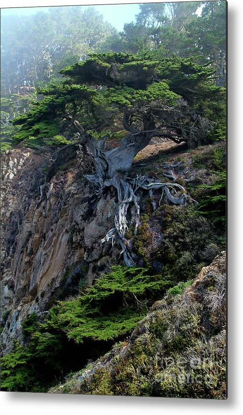 Landscape Metal Print featuring the photograph Point Lobos Veteran Cypress Tree by Charlene Mitchell