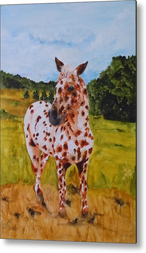 Horse Metal Print featuring the painting Spotted in Hawaii by Jean Blackmer