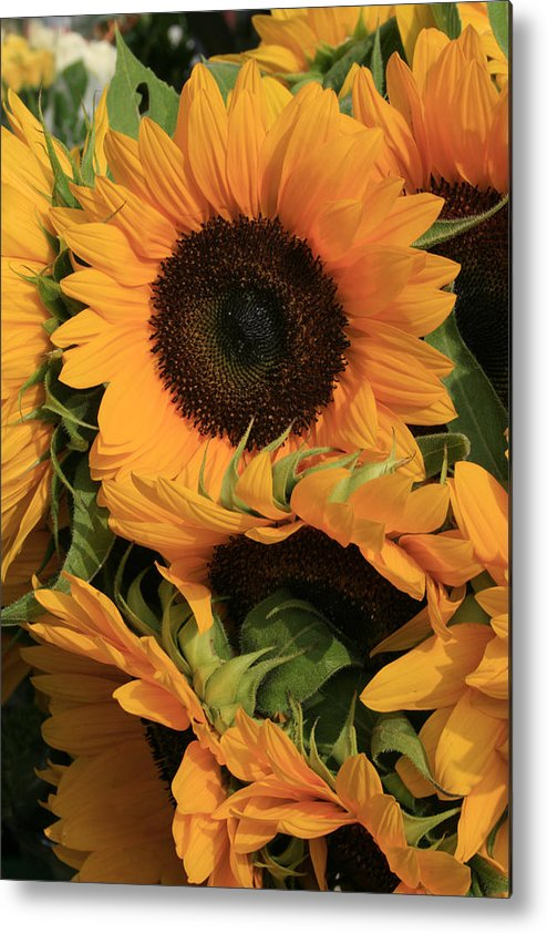 Flowers Metal Print featuring the photograph Suns and Brothers by Alan Rutherford