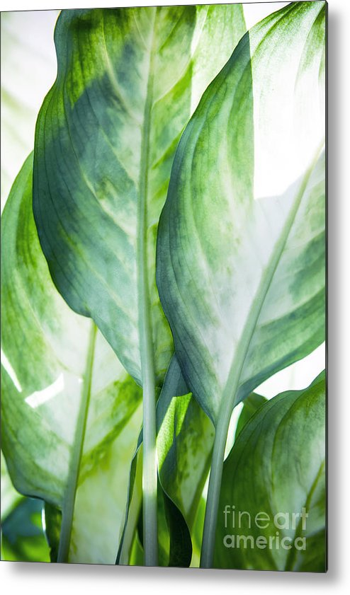 Summer Metal Print featuring the painting Tropic Abstract by Mark Ashkenazi