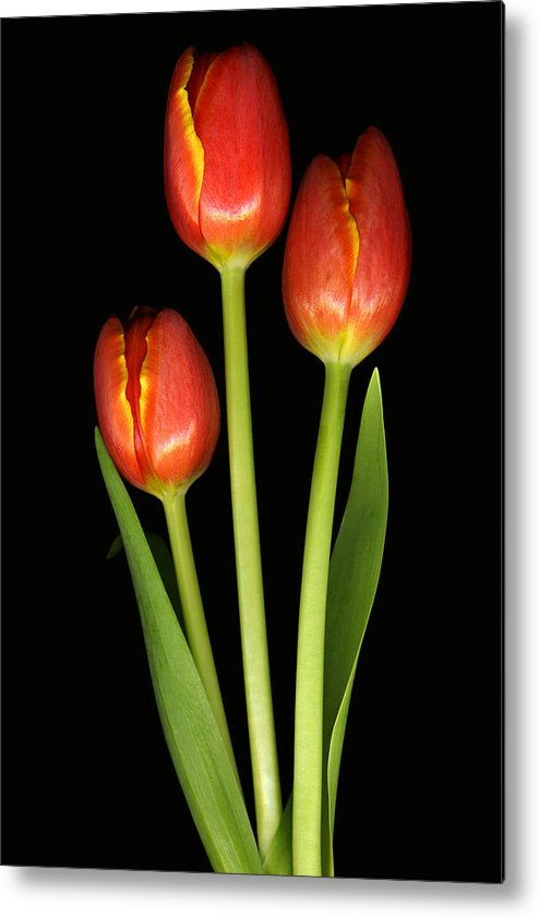 Scanography Metal Print featuring the photograph Tulip Trio Revisted by Deborah J Humphries