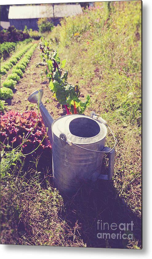 Garden Metal Print featuring the photograph Watering Can In A Farm Field by Edward Fielding