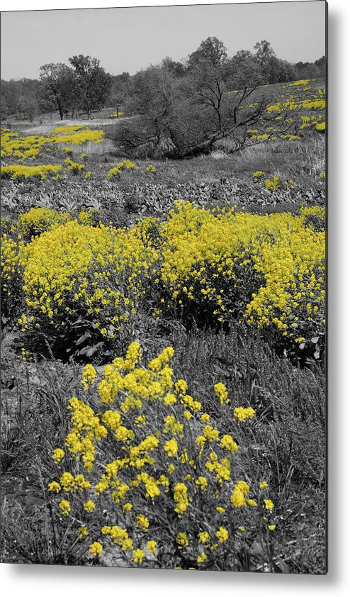 Trees Metal Print featuring the photograph Yellow Prairie II by Dylan Punke