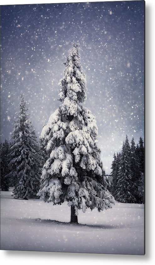 Scenics Metal Print featuring the photograph Winter Tree by Borchee