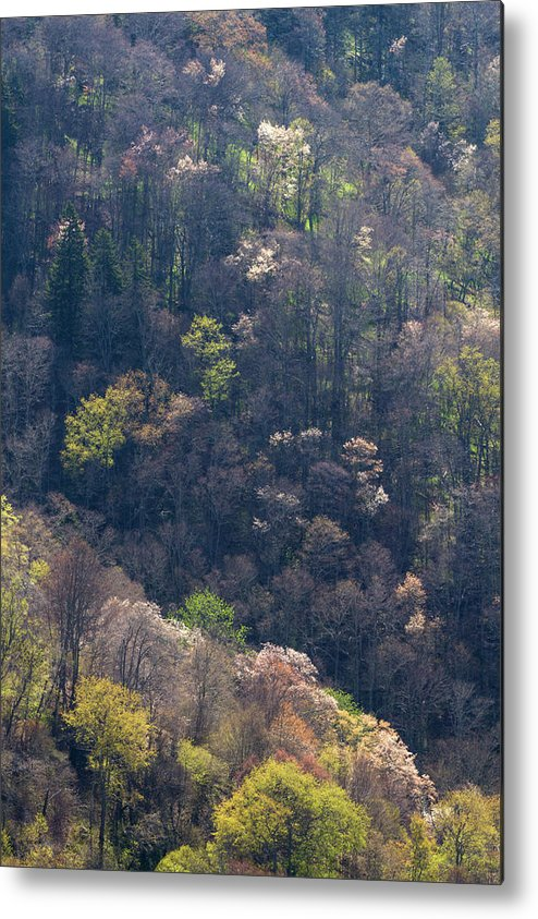 Scenics Metal Print featuring the photograph Early Spring, North Carolina by Jerry Whaley