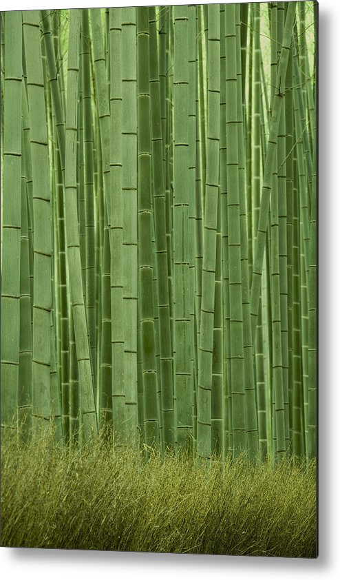 Bamboo Metal Print featuring the photograph Grove Of Bamboo Trees Phyllostachys by Akira Kaede