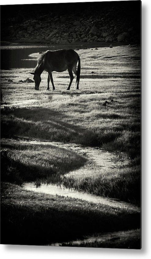 Horse Metal Print featuring the photograph Horse by Muratseyit