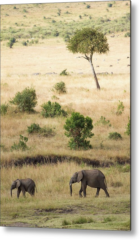 Kenya Metal Print featuring the photograph Mother And Baby Elephant In Savanna by Universal Stopping Point Photography