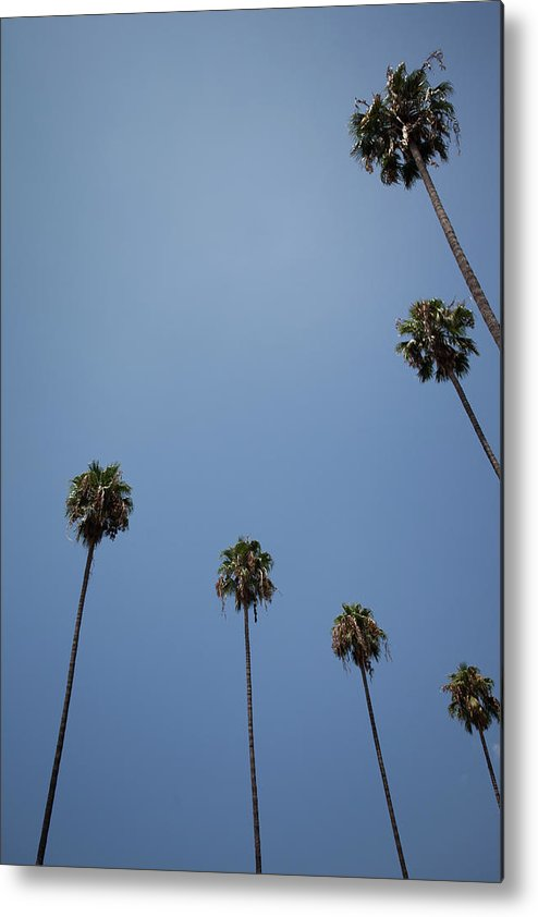 Tranquility Metal Print featuring the photograph Palm Trees by Tuan Tran