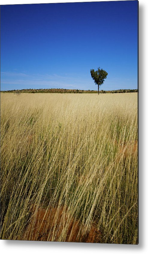 Scenics Metal Print featuring the photograph Small Single Tree In Field by Universal Stopping Point Photography