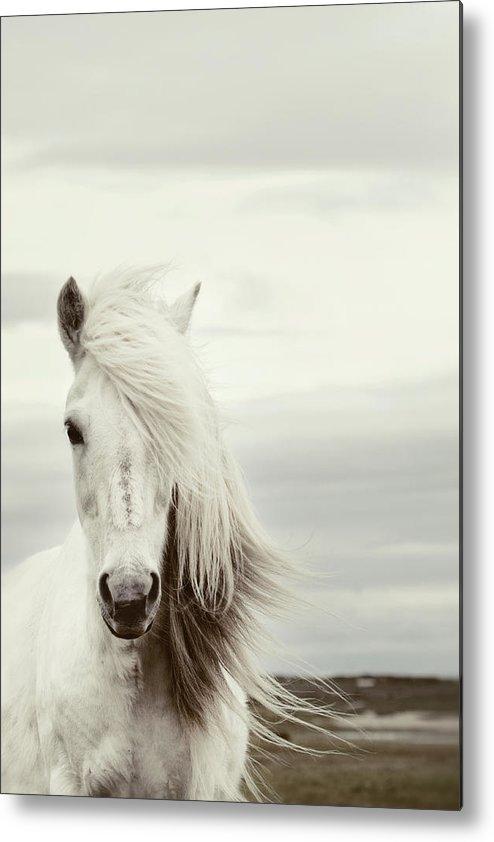 Horse Metal Print featuring the photograph ísold by Gigja Einarsdottir