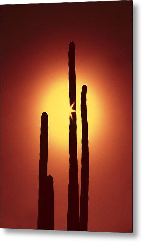 Sun Metal Print featuring the photograph Encinitas Cactus by Andre Aleksis