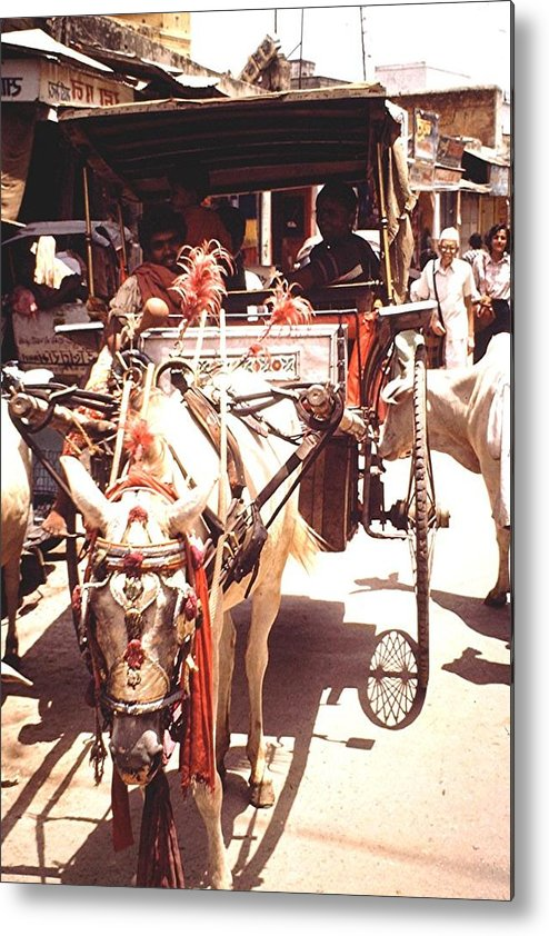 Horses Metal Print featuring the photograph Horse Cart, India by Barron Holland