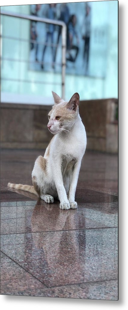 Wallpaper Metal Print featuring the photograph Cat Sitting On Marble Floor by Prashant Dalal