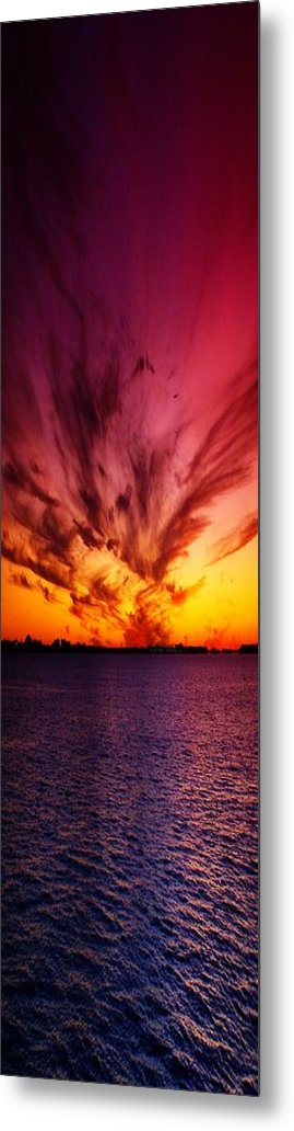 Nature Metal Print featuring the photograph Showoff II by Florene Welebny