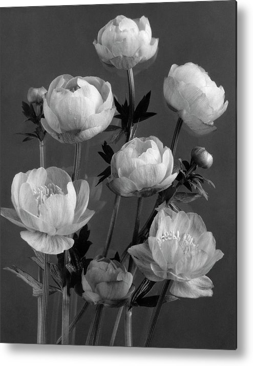 Flowers Metal Print featuring the photograph Still Life Of Flowers by J. Horace McFarland