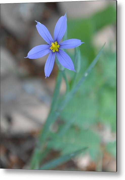 Blue Metal Print featuring the photograph Blue Flower by Frank Madia