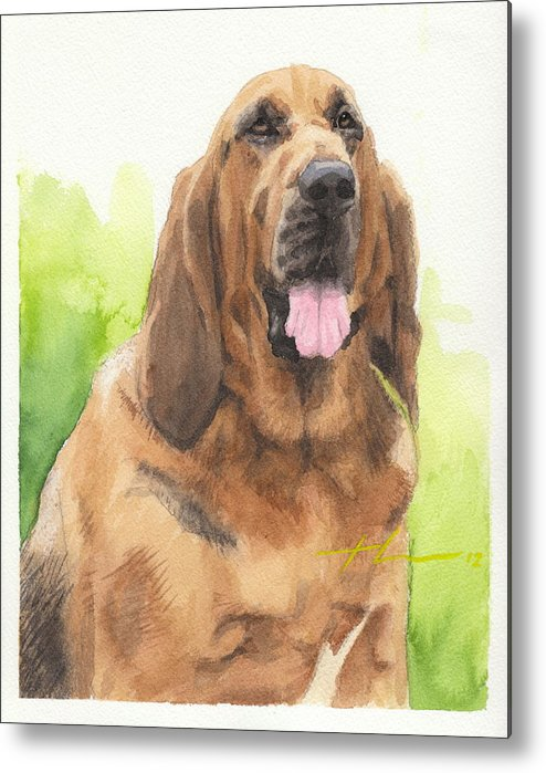 <a Href=http://miketheuer.com Target =_blank>www.miketheuer.com</a> Hound Dog Watercolor Portrait Metal Print featuring the drawing Hound Dog Watercolor Portrait by Mike Theuer