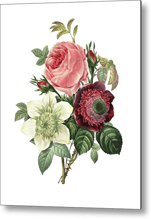 White Background Metal Print featuring the digital art Rose, Anemone And Clematis | Redoute by Nicoolay