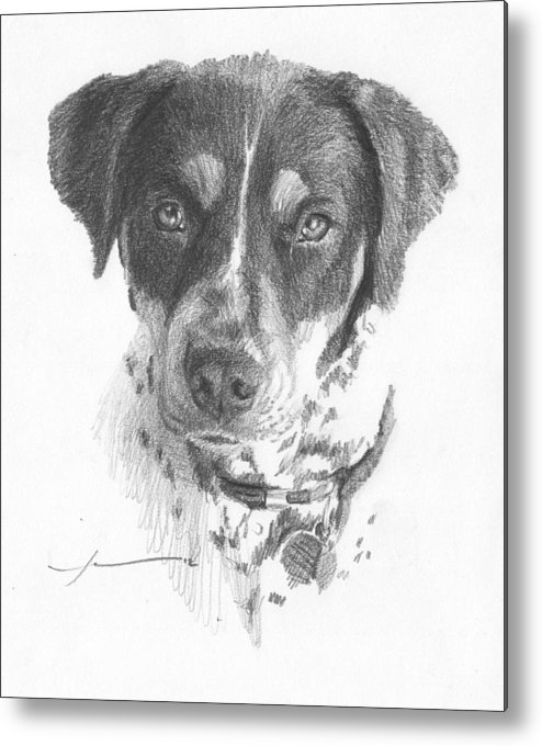 <a Href=http://miketheuer.com Target =_blank>www.miketheuer.com</a> Spaniel Pencil Portrait Metal Print featuring the drawing Spaniel Pencil Portrait by Mike Theuer