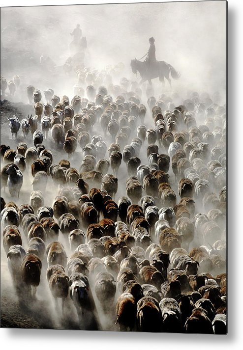 Sheep Metal Print featuring the photograph The Great Migration Of China by Adam Wong