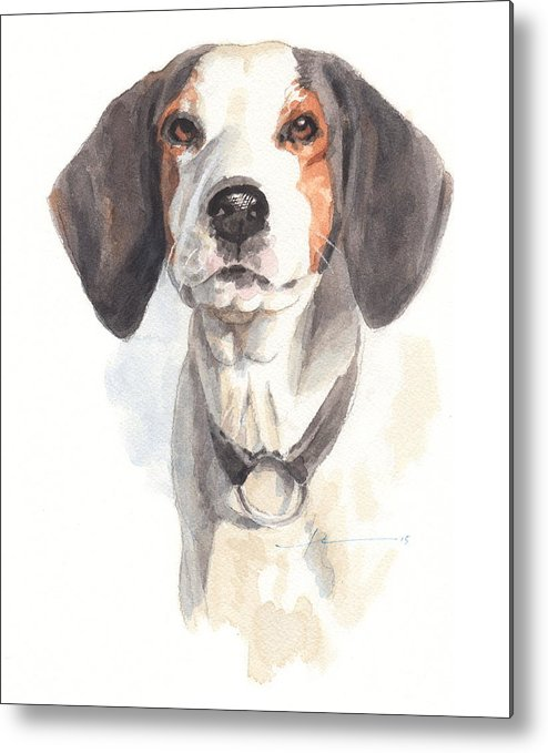 <a Href=http://miketheuer.com Target =_blank>www.miketheuer.com</a> Treeing Walker Coonhound Metal Print featuring the drawing Treeing Walker Coonhound by Mike Theuer