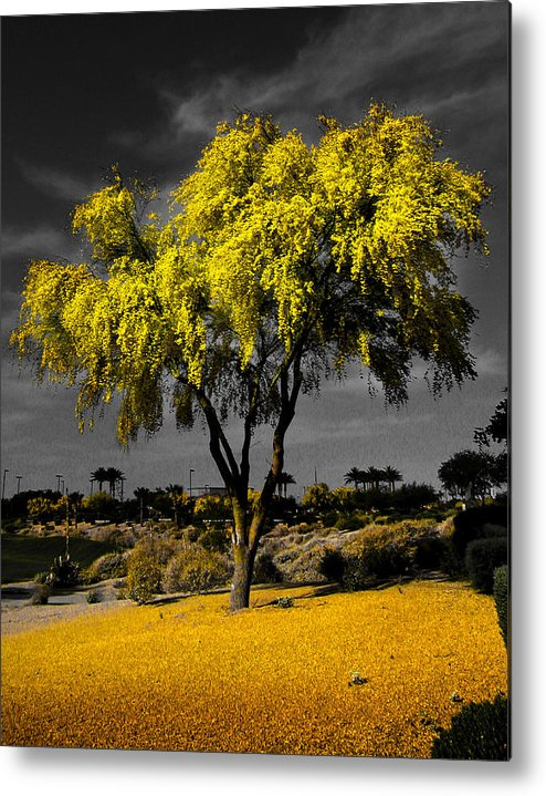 Paloverfe Metal Print featuring the photograph Palo Verde by Jim Painter