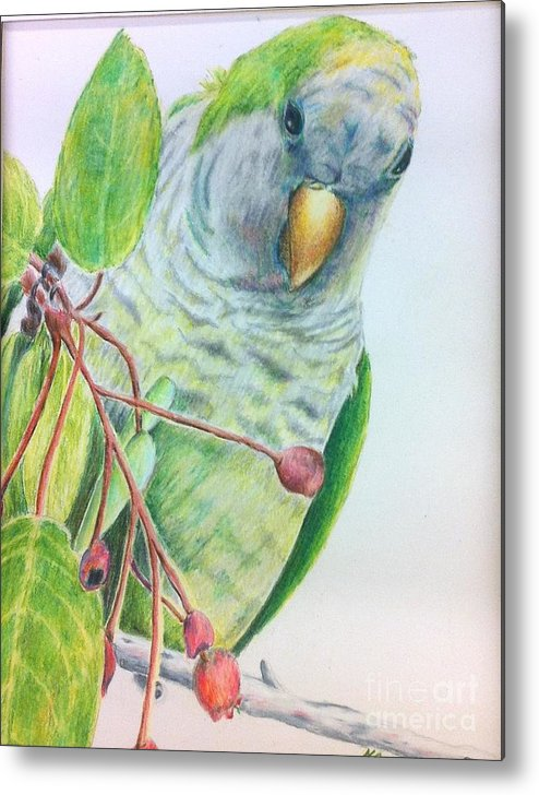 Nature Metal Print featuring the painting Quaker by Norma Gafford