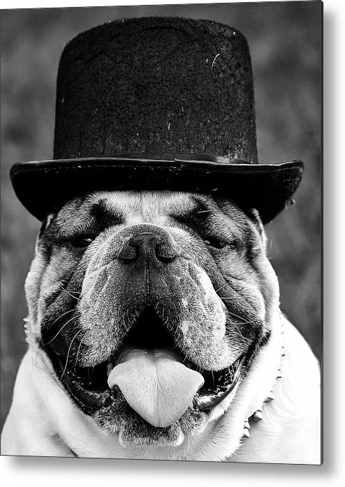 Dog Metal Print featuring the photograph An English Gentleman by Mountain Dreams