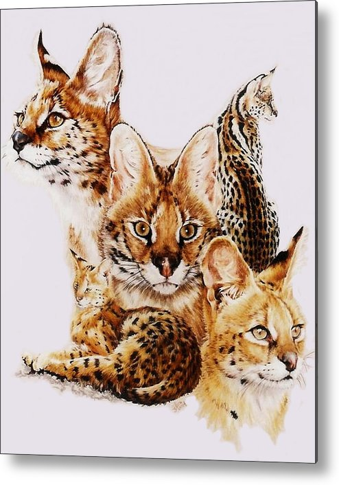 Serval Metal Print featuring the drawing Adroit by Barbara Keith