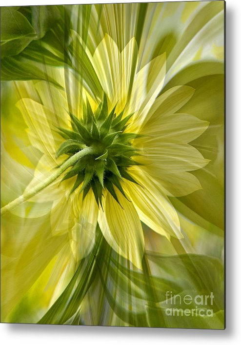 Floral Metal Print featuring the photograph Back Petal by Chuck Brittenham