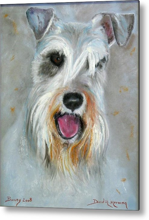 Schnauzer Metal Print featuring the painting Bailey by David Horning