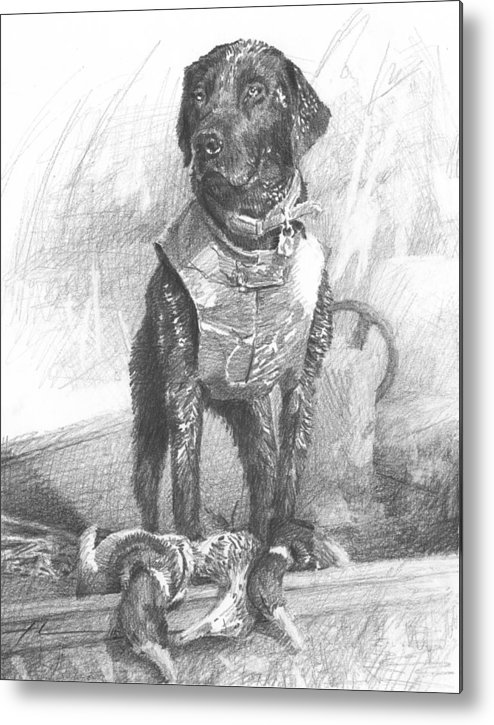 <a Href=http://miketheuer.com Target =_blank>www.miketheuer.com</a> Black Labrador Duck Hunting Pencil Portrait Metal Print featuring the drawing Black Labrador Duck Hunting Pencil Portrait by Mike Theuer