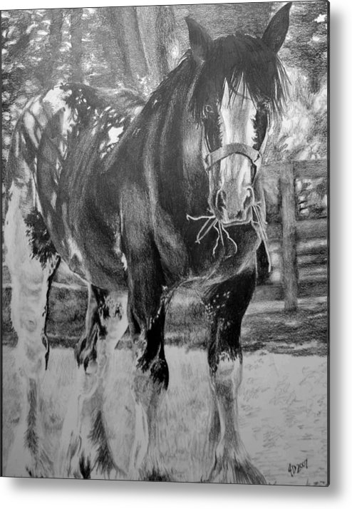 Horse Metal Print featuring the drawing Clydesdale by Darcie Duranceau