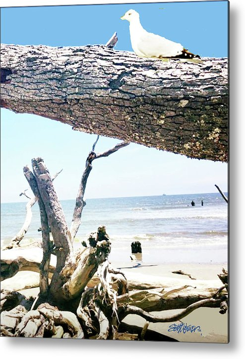 Daydreams And Driftwood Metal Print featuring the photograph Daydreams and Driftwood by Seth Weaver