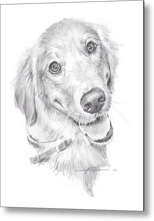 Www.miketheuer.com Metal Print featuring the drawing Golden Retriever by Mike Theuer