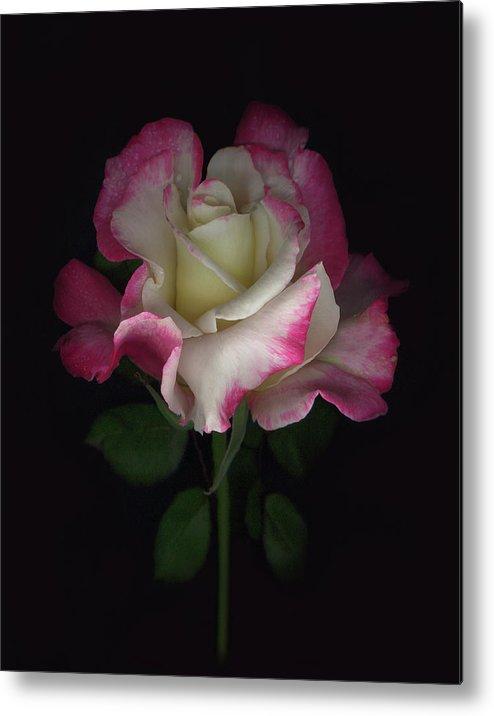 Rose Metal Print featuring the digital art Niki's Rose by Sandi F Hutchins