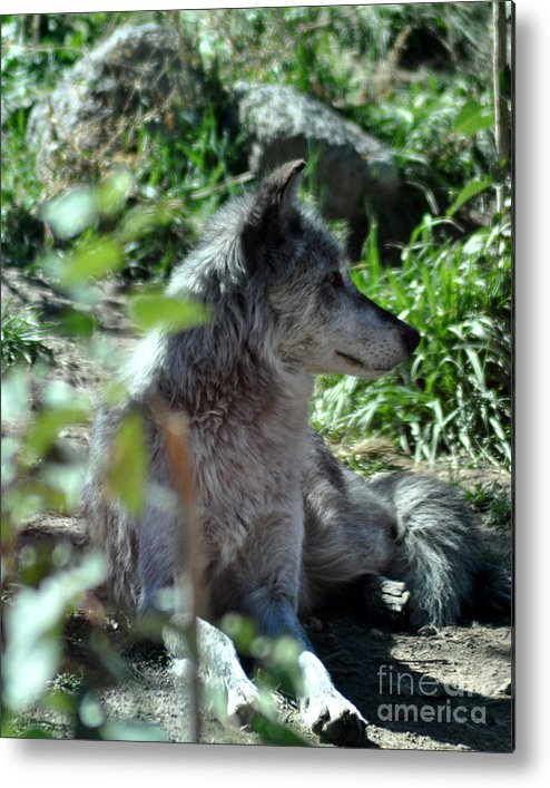 Berry Metal Print featuring the photograph On Guard by Diane E Berry