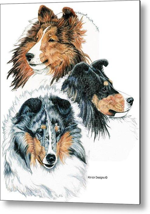 Shetland Sheepdog Metal Print featuring the drawing Shetland Sheepdogs by Kathleen Sepulveda
