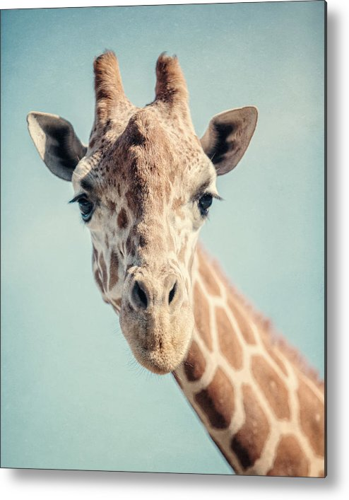 Giraffe Metal Print featuring the photograph The Baby Giraffe by Lisa R