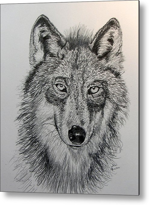 Original Drawing Metal Print featuring the drawing Timber Wolf by Stan Hamilton