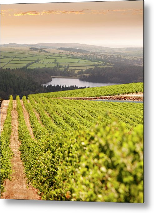 Scenics Metal Print featuring the photograph Vineyard At Sunset by Lockiecurrie