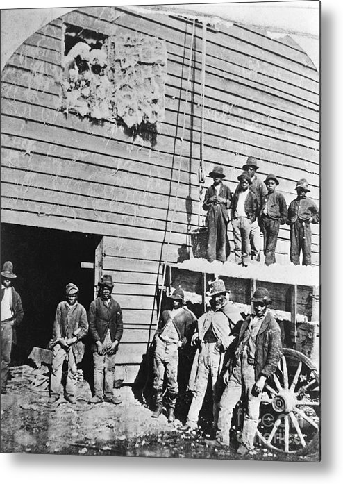 Working Metal Print featuring the photograph Black Men At Cotton Barn by Bettmann