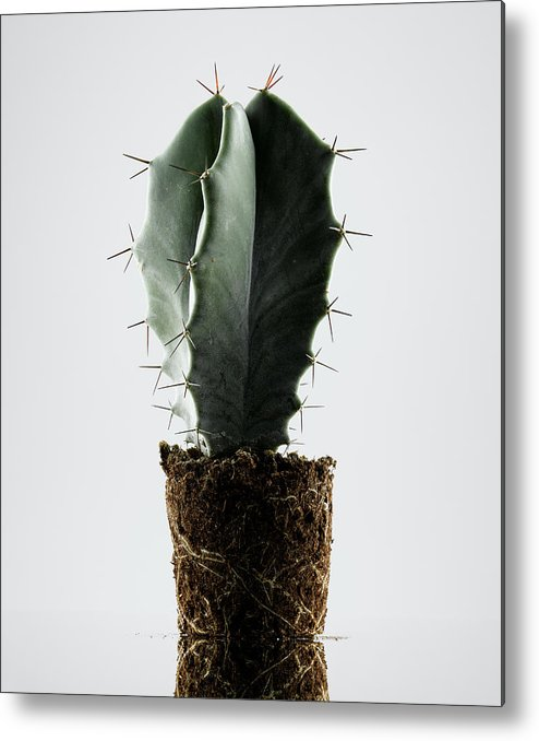 White Background Metal Print featuring the photograph Cactus On White Background by Chris Stein
