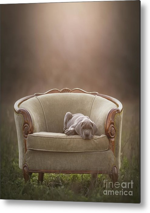 Sofa Metal Print featuring the photograph Floyd by Mike Bons