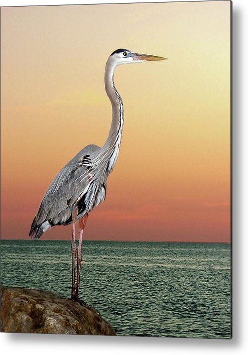 Scenics Metal Print featuring the photograph Great Blue Heron In Seaside Sunset by Melinda Moore